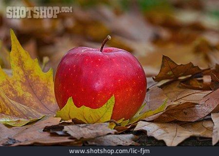 Apple, Autumn Leaves