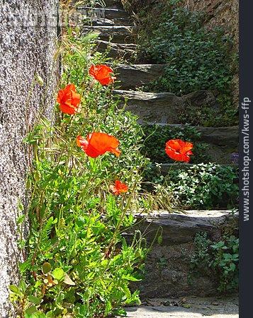 Staircase, Poppy Flower