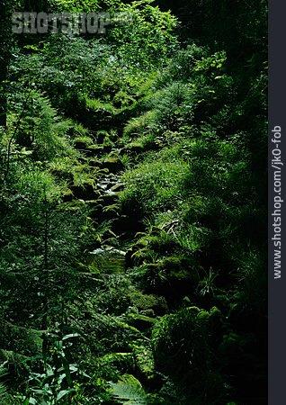 Forest, Moss, Mountain Stream