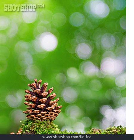 Pine Cones, Pine Cone, Pine Cone