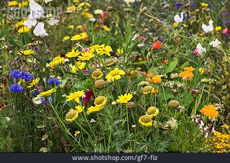 Flower, Flower Meadow