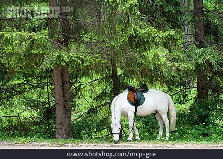 Horse, Grazing, Ride