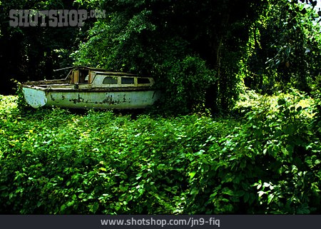 Forest, Shipwreck, Overgrown