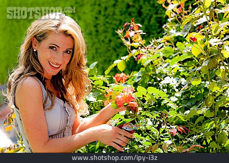Woman, Gardening, Rose Cut