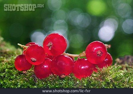 Berries , Currant