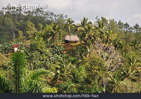 Vegetation, Cuba, Baracoa, Sierra Del Purial