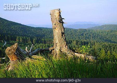 Forest, Mountains, Tree Stump