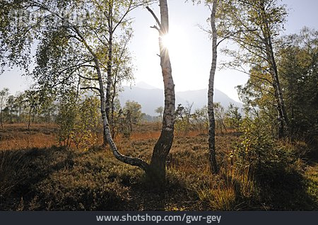 Tree, High Morr, Kendlmühlfilzn