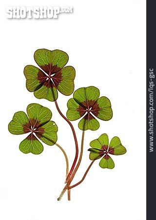 Clover, Four -, Four Leafed Clover, Cloverleaf, Lucky Charms
