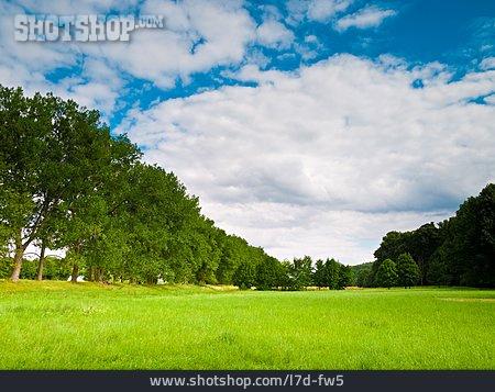 Landscape, Meadow