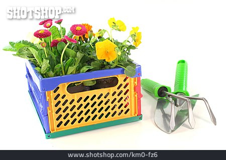Gardening, Spring Flower, Planting