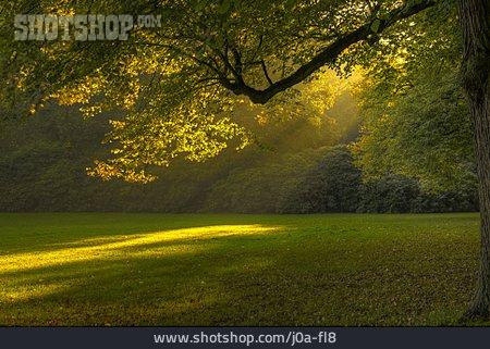 Glade, Morning Mood, Deer Park