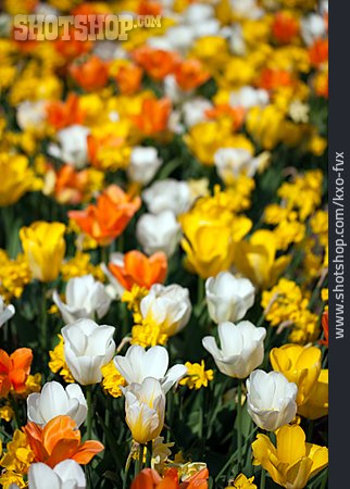 Spring, Flower Bed