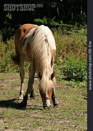 Nutrition & Eating, Horse