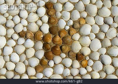 Mussel, Star