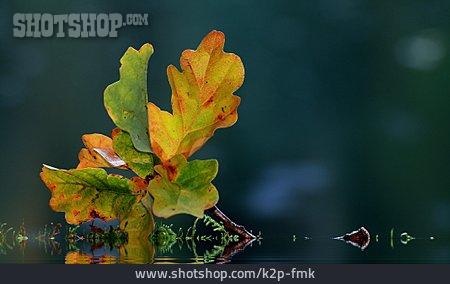 Autumn, Autumn, Oak Leaf