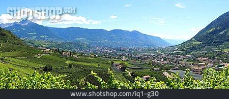 Vineyard, Merano, Algund