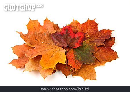 Autumn, Maple Leaf, Leaf Pile