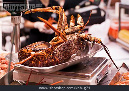 Lobster, Fish Market, Weight Scale