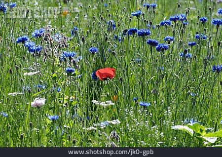 Meadow, Wild Flower