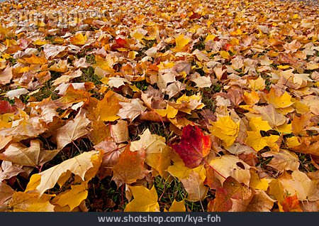 Autumn, Leaves, Autumn Leaves
