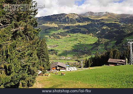 Alp, Bernese Oberland