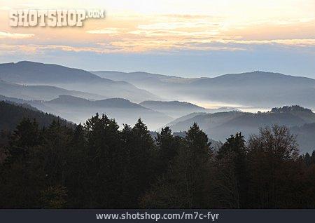 Forest, Fog, Black Forest