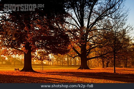 Park, Autumn, Bench