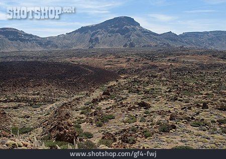 Volcanic Landscape, Las Canadas, Echium