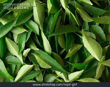 Full Frame, Leaf, Bay Leaf