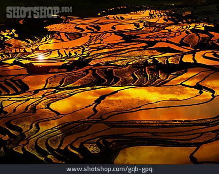 Paddy, Rice Terraces