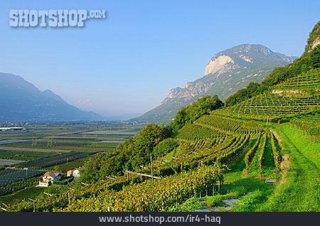 Vineyard, Trentino, Plantation, Fruit Growing
