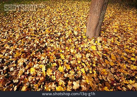 Autumn, Leaves, Autumn Leaves, Maple Leaf