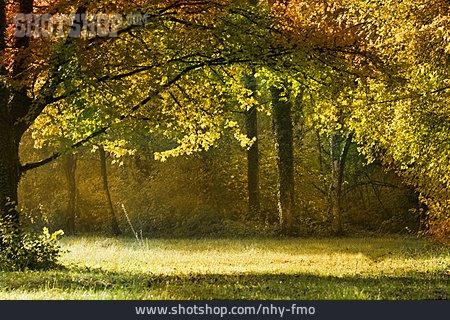 Glade, Autumn Forest