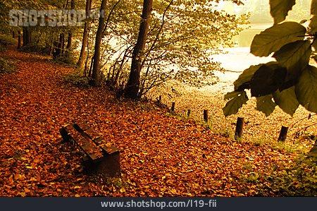 Autumn, Autumn Leaves, Bank