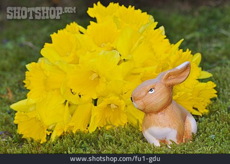 Easter, Easter Bunny, Easter Daffodil