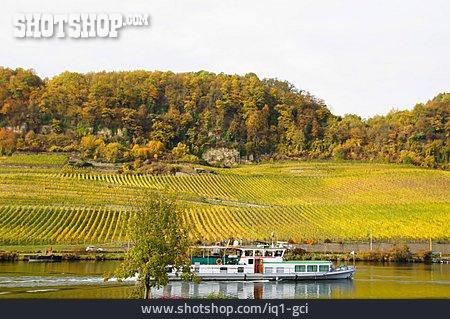 Vineyard, Moselle River