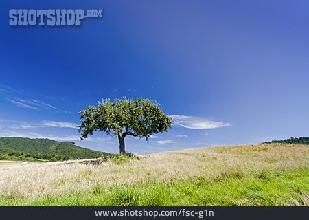 Landscape, Apple Tree