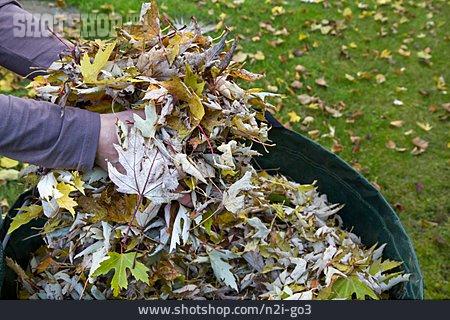 Autumn Leaves, Gardening, Leaf Pile