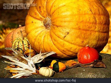 Still Life, Autumn, Squash