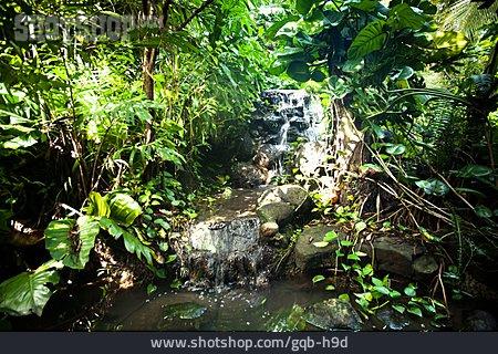 Stream, Jungle, Tropical