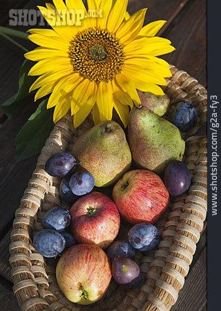 Fruit, Fruit Harvest