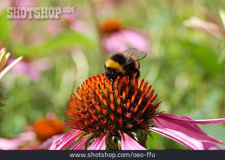 Bumblebee, Sun Hat