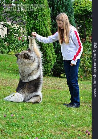 Girl, Dog School, Keeshond