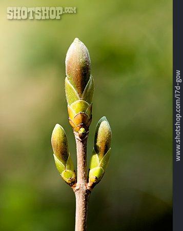 Spring, Bud