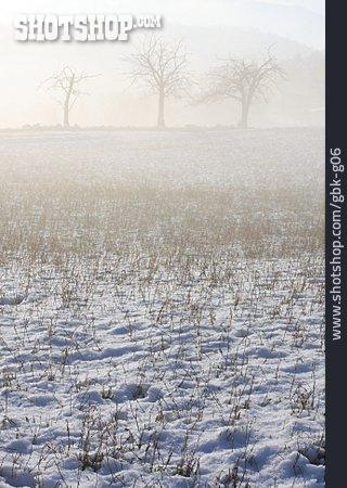 Winter Landscape, Fog