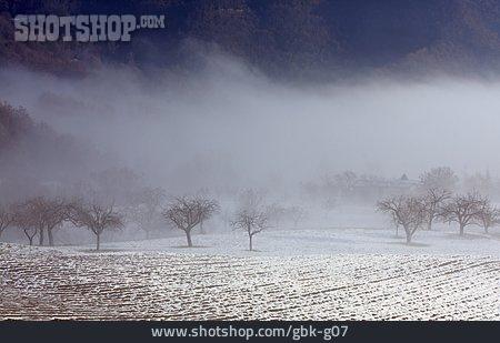 Arable, Winter Landscape, Fog