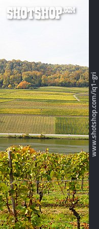 Viticulture, Moselle Valley