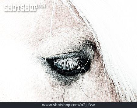 Horse, High Key