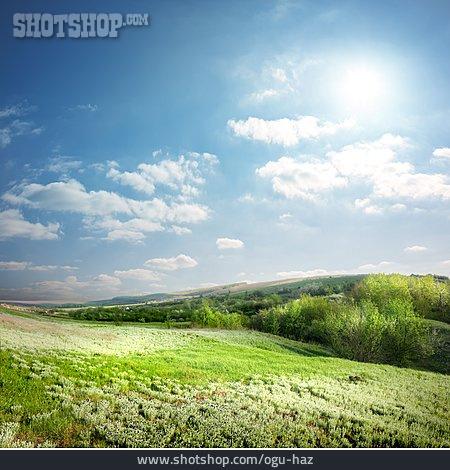 Landscape, Meadow, Summer
